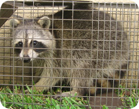 Orange County Florida Animal Control Wildlife Critter